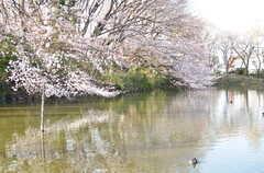 水鳥もお花見。(2013-03-21,共用部,ENVIRONMENT,1F)