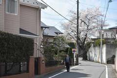シェアハウス周辺の様子2。桜の木がたくさんあります。(2018-03-26,共用部,ENVIRONMENT,1F)