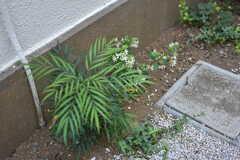 脇道には、季節の花や植物が咲いています。(2018-06-04,共用部,OTHER,1F)
