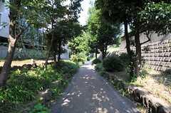 駅からは緑道を通る道が気持ちいいです。(2013-07-09,共用部,ENVIRONMENT,1F)