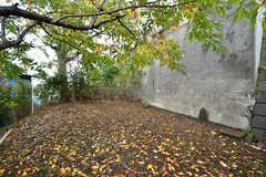 庭の様子。(2019-11-28,共用部,OTHER,1F)