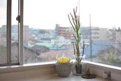 窓際のサボテン。(2017-03-22,共用部,KITCHEN,2F)