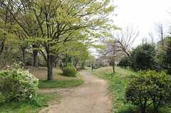 専有部のベランダから眺めることもできる、桜台公園の様子。(2011-04-15,共用部,ENVIRONMENT,1F)