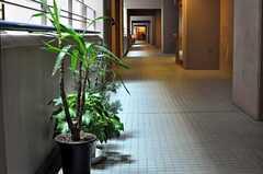 マンションの外廊下の様子。(2010-10-19,共用部,OTHER,2F)