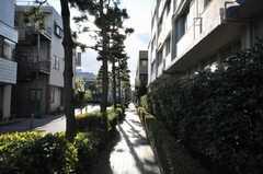 各線東神奈川駅からシェアハウスへ向かう道の様子2。松の並木が綺麗。(2009-12-21,共用部,ENVIRONMENT,1F)
