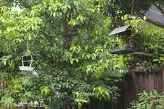 野鳥もくるので、エサが置いてあります。(2015-05-19,共用部,OTHER,1F)