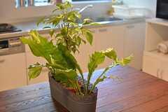 植物が植えられています。(2015-12-01,共用部,LIVINGROOM,1F)