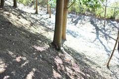 近くの公園には野生のリスがたくさんいます。どんぐりを食べている姿が見られるかも。(2018-01-25,共用部,ENVIRONMENT,1F)