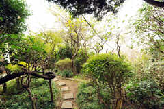 庭の様子。(2011-10-20,共用部,OTHER,1F)