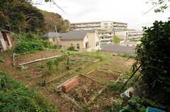 隣の敷地には畑があり、区画を借りているのだそう。(2011-10-20,共用部,OTHER,1F)