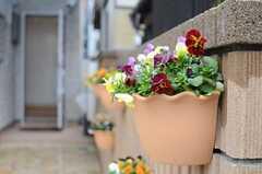 アプローチの壁に飾られた花。(2013-02-15,周辺環境,ENTRANCE,1F)