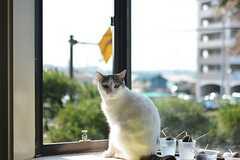 飼い猫のモモちゃんが窓辺に、たたずんでいます。(2016-05-19,共用部,OTHER,1F)