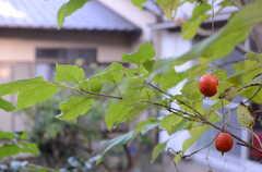 種々多々の植物が植えられています。(2013-11-26,共用部,OTHER,1F)