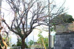 桜の木が植えられています。(2013-11-26,共用部,OTHER,1F)