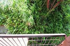 窓の外は緑が生い茂っています。(204号室)(2012-05-29,専有部,ROOM,2F)