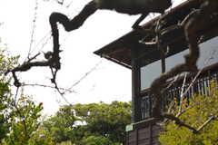梅の木越しの建物。(2021-06-11,周辺環境,ENTRANCE,1F)