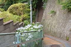 近くの階段の様子。紫陽花が綺麗です。(2021-06-11,共用部,ENVIRONMENT,1F)