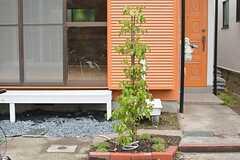 建物の正面にはヤマボウシが植えられています。初夏に白い花をつけるそう。(2015-06-09,共用部,OTHER,1F)