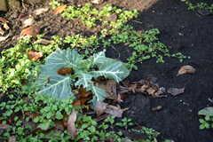 花壇はこれから畑にしていく予定とか。(2017-01-10,共用部,GARAGE,1F)