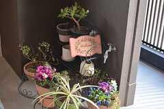 オーナーさんが管理している鉢植え。(2015-03-17,周辺環境,ENTRANCE,1F)