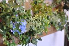 玄関には緑が添えられています。(2012-08-20,周辺環境,ENTRANCE,2F)