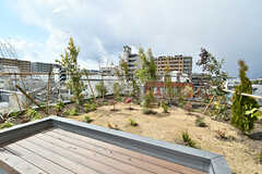 屋上庭園の様子。ベンチもあります。(2017-03-07,共用部,OTHER,4F)