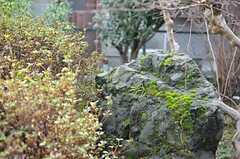 立派な庭です。(2015-03-04,周辺環境,ENTRANCE,1F)