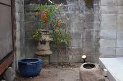 坪庭。(2013-02-17,共用部,OTHER,1F)