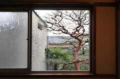 窓をあけると立派な松。借景。(206号室)(2013-02-17,専有部,ROOM,2F)