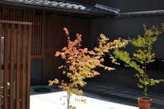 エントランスには紅葉。(2013-08-02,共用部,OUTLOOK,1F)