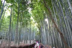 嵐山の竹林。(2017-03-07,共用部,ENVIRONMENT,1F)