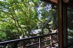 窓の外の景色。四季を感じられます。(203号室)(2014-09-09,専有部,ROOM,2F)