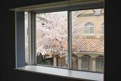 出窓から隣の桜がきれいに見えます。(205号室)(2016-04-06,専有部,ROOM,2F)