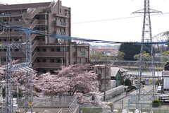春、屋上からは桜が見えます。(2019-04-10,共用部,OTHER,5F)
