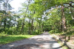森林公園の散歩道。(2015-09-28,共用部,ENVIRONMENT,1F)