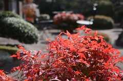 まだまだ紅葉が色鮮やかです。(2014-01-28,共用部,OTHER,1F)