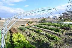 建物裏手には畑があり、野菜を育てることができます。(2019-01-20,共用部,ENVIRONMENT,1F)