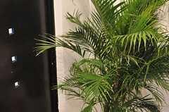 玄関脇にはグリーン。(2014-03-13,周辺環境,ENTRANCE,2F)