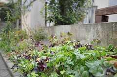 道路に面している花壇は、紫陽花なども綺麗に咲くのだそう。(2012-01-15,共用部,OTHER,1F)