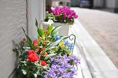 玄関まわりには花が飾られています。(2013-04-08,共用部,OUTLOOK,1F)