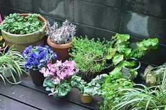 植物がたくさん並んでいます。季節ごとに色合いの変化も楽しめるのだとか。(2014-03-05,共用部,OTHER,1F)