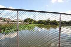 近くには大きな溜池があります。(2012-08-19,共用部,ENVIRONMENT,1F)