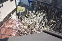窓からは、梅の花を眺めることができます。(207号室)(2018-03-13,専有部,ROOM,2F)
