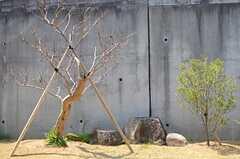 庭の様子3。(2014-04-09,共用部,OTHER,1F)