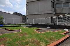 屋上には芝が敷かれ、奥には菜園があります。(2011-08-08,共用部,OTHER,4F)