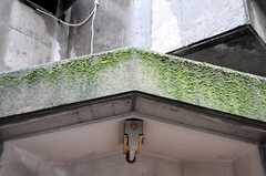 玄関脇にある装飾スペースの屋根部分には、少しコケが生えています。(2011-09-21,共用部,OTHER,1F)