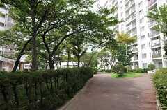 建物は共用の庭に囲まれています。(2013-09-13,共用部,ENVIRONMENT,1F)