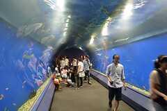 海遊館の水槽トンネル。(2013-09-13,共用部,ENVIRONMENT,1F)