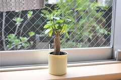 カウンターの植物の様子。(2011-09-21,共用部,OTHER,1F)