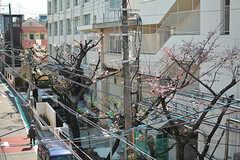 建物の向かいは小学校。ベランダから桜が見えます。(305号室)(2017-04-04,専有部,ROOM,3F)
